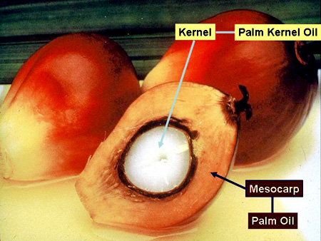 fruit processing diagram with Pam Kernel Oil Vs Palm Oil on 30 Amazing Benefits Of Moringa Oleifera likewise Overgewicht Obesitas further Pam Kernel Oil Vs Palm Oil furthermore Zywnosc also Logistics Software blogspot.