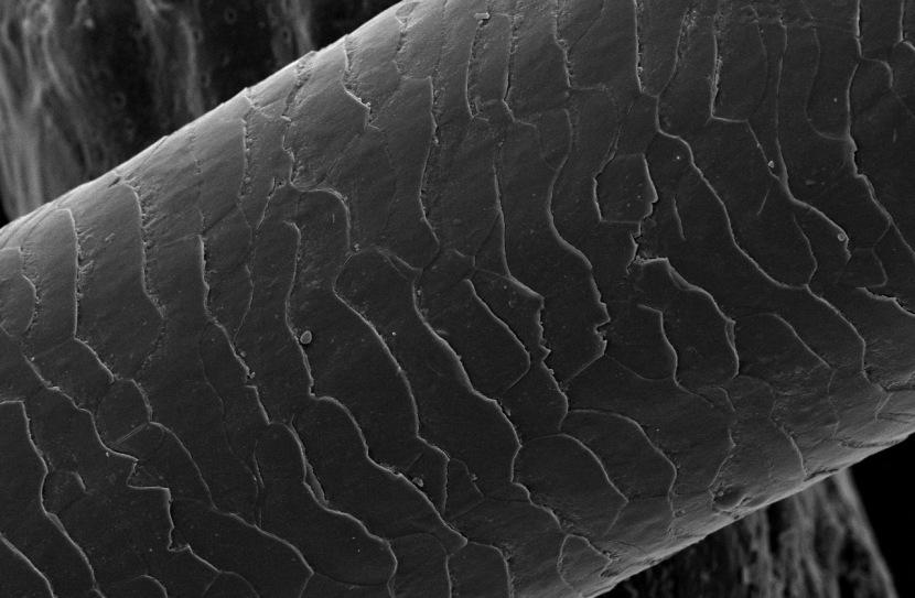 hair-electron-microscope.jpeg