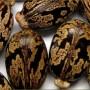 Natural Nigerian Castor Seeds Nigeria