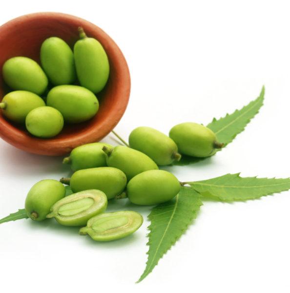 Medicinal neem fruits over white background