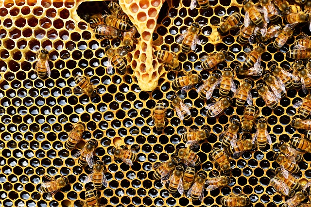 Bees Honey Pollen Hive Nigeria